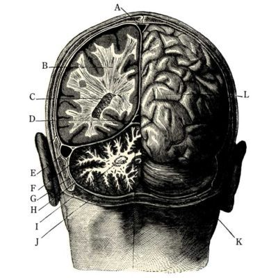 Medical brain illustration